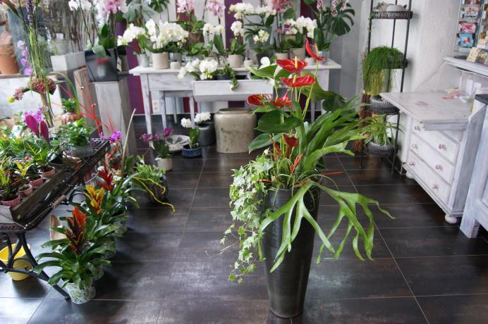 Plantes fleuries N° 16