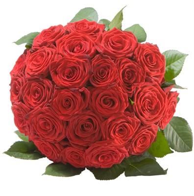 La perle de roses rouges N° 22