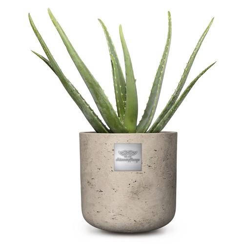 Anthony Aloe vera pot diam. 15cm Hauteur avec la plante env. 45cm N°5 H