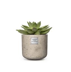 Freddy (Echeveria) pot diam. 12cm Hauteur avec la plante  env. 15cm