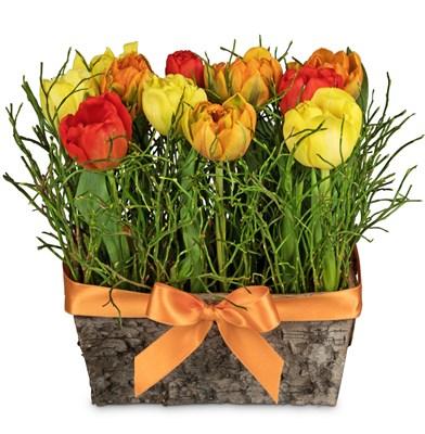 Arrangement de tulipes N° 6