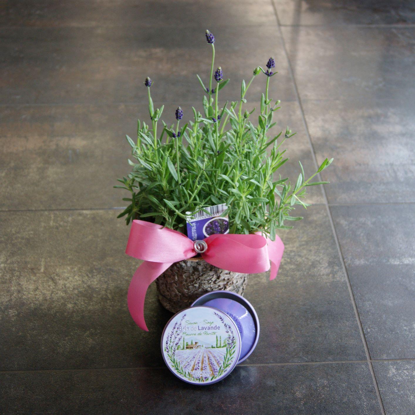 Plante et savon de lavande N°24