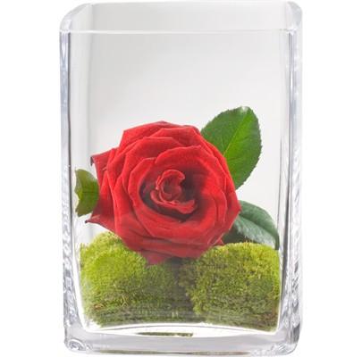 Battement de cœur avec vase N° 16