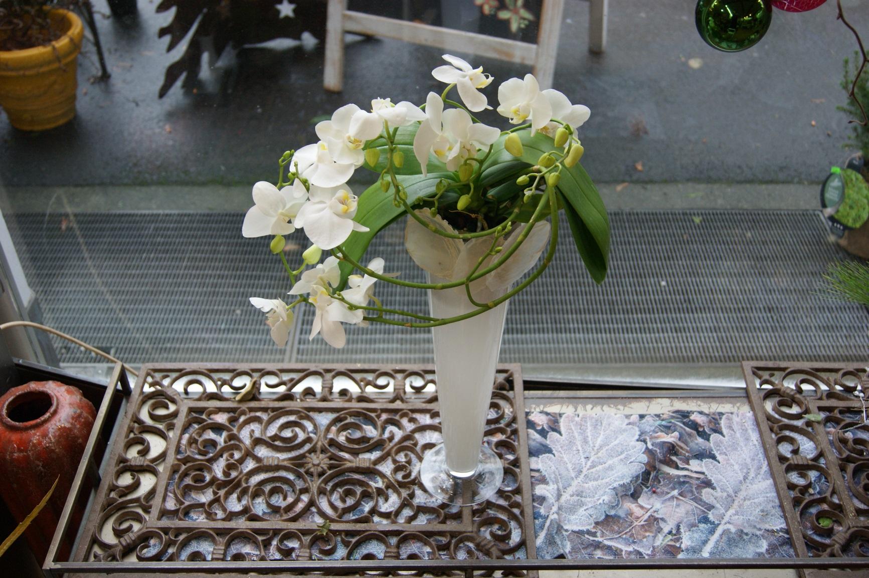 Orchidée blanche spiral avec un vase N° 6