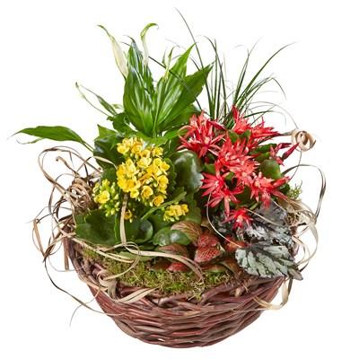 Corbeille de plantes d'intérieur multicolores  N° 13