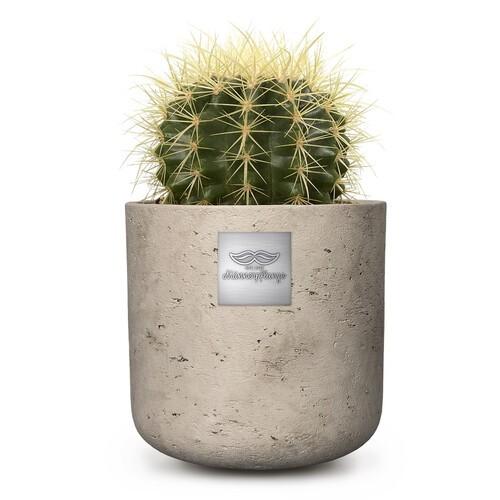 Jack ( Echinocactus grusonii) pot diam. 12com Hauteur de la plante env. 15cm
