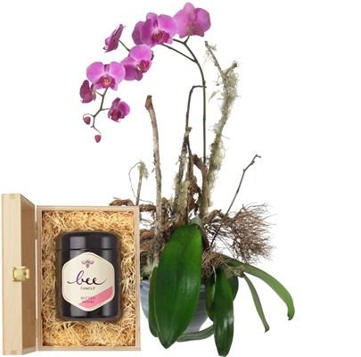 Plante d'orchidée fuchsia avec un pot de miel N° 21