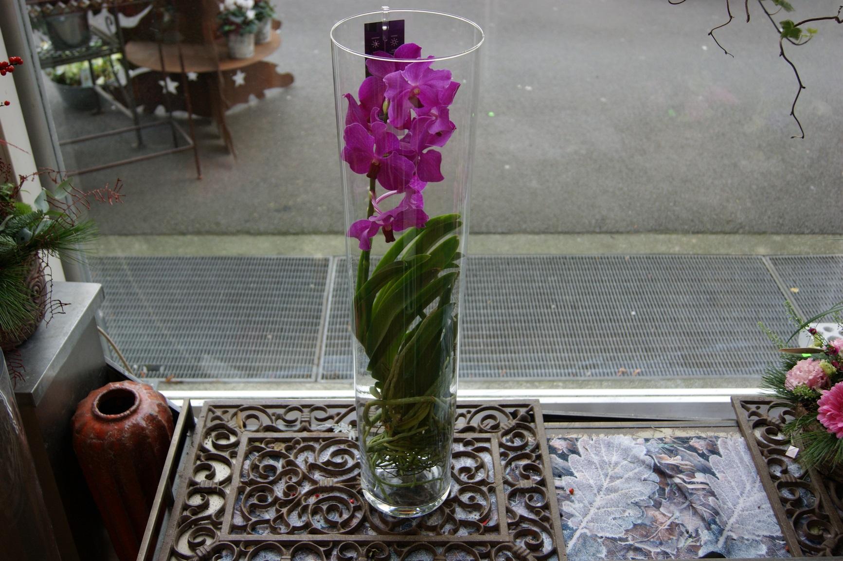 Orchidée vanda fuchsia avec un vase N° 4