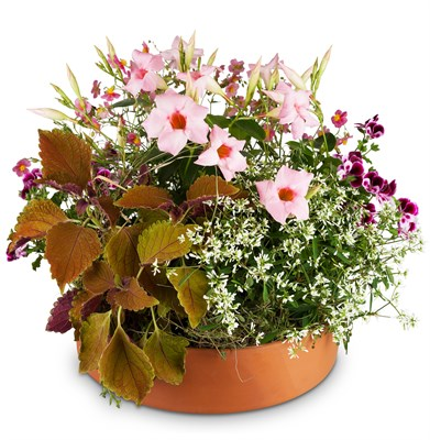 Terrine de saison Charmante jardinière de plantes d'extérieur N°11
