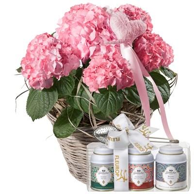 Hortensia (rose) avec cœur et coffret cadeau de thés Gottlieber N° 14