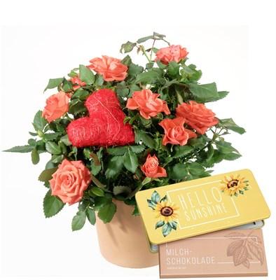 Passion et surprise  (rosier et cœur) avec tablette de chocolat (Hello sunshine) N° 6